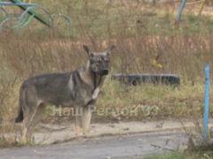 Приюта для бездомных животных в Коврове пока не будет