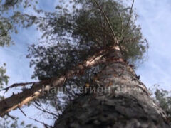 400 миллионов на восстановление владимирских лесов