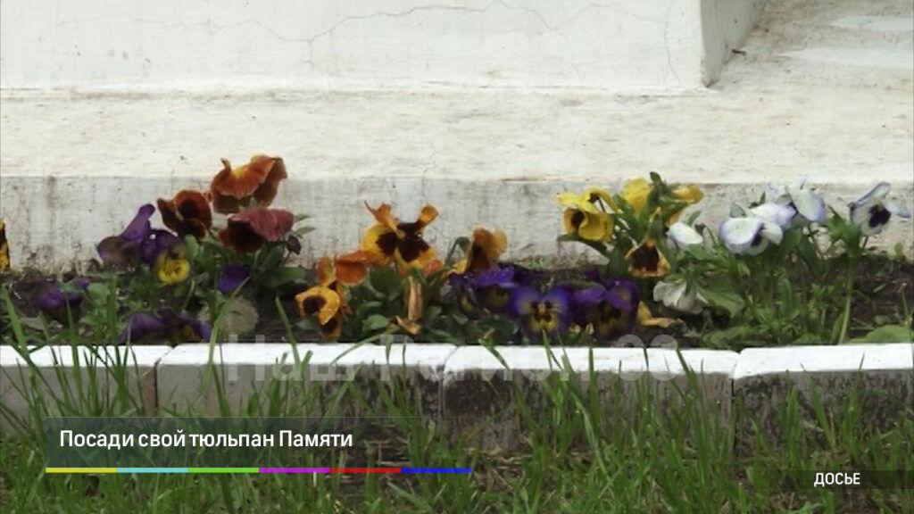 Посади свой тюльпан Памяти